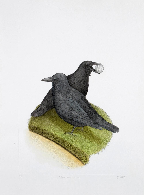 'Australian Raven'