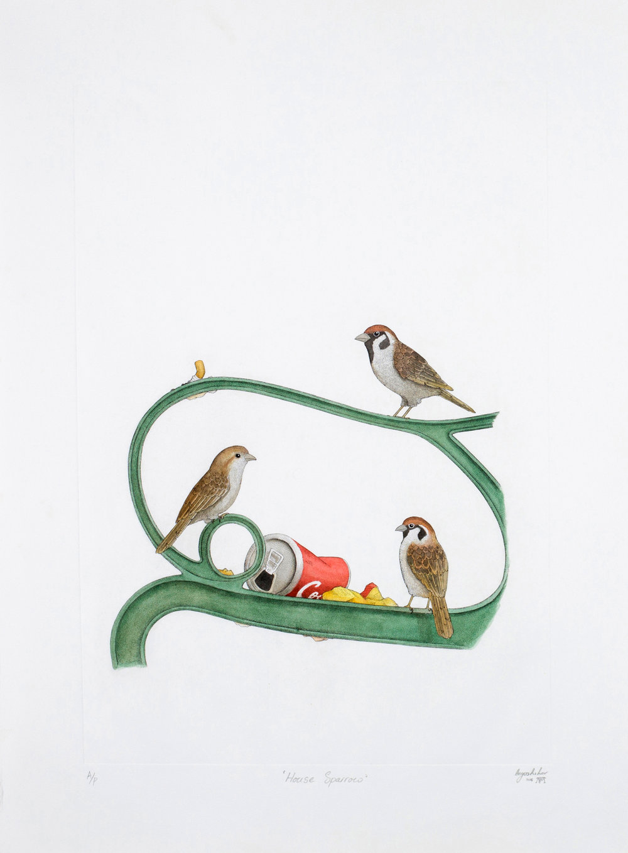 'House Sparrow'