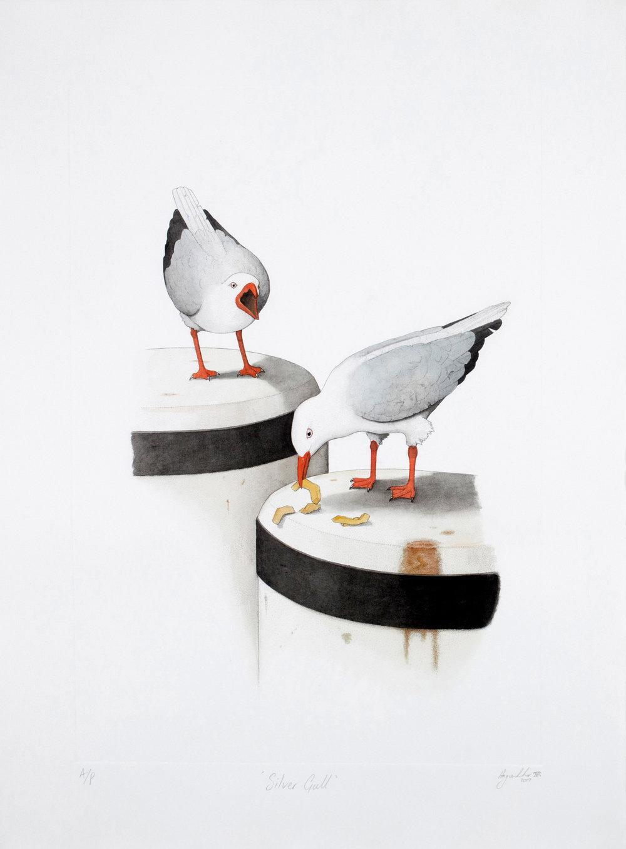 'Silver Gull'