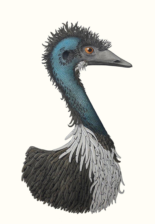 'The Emu'