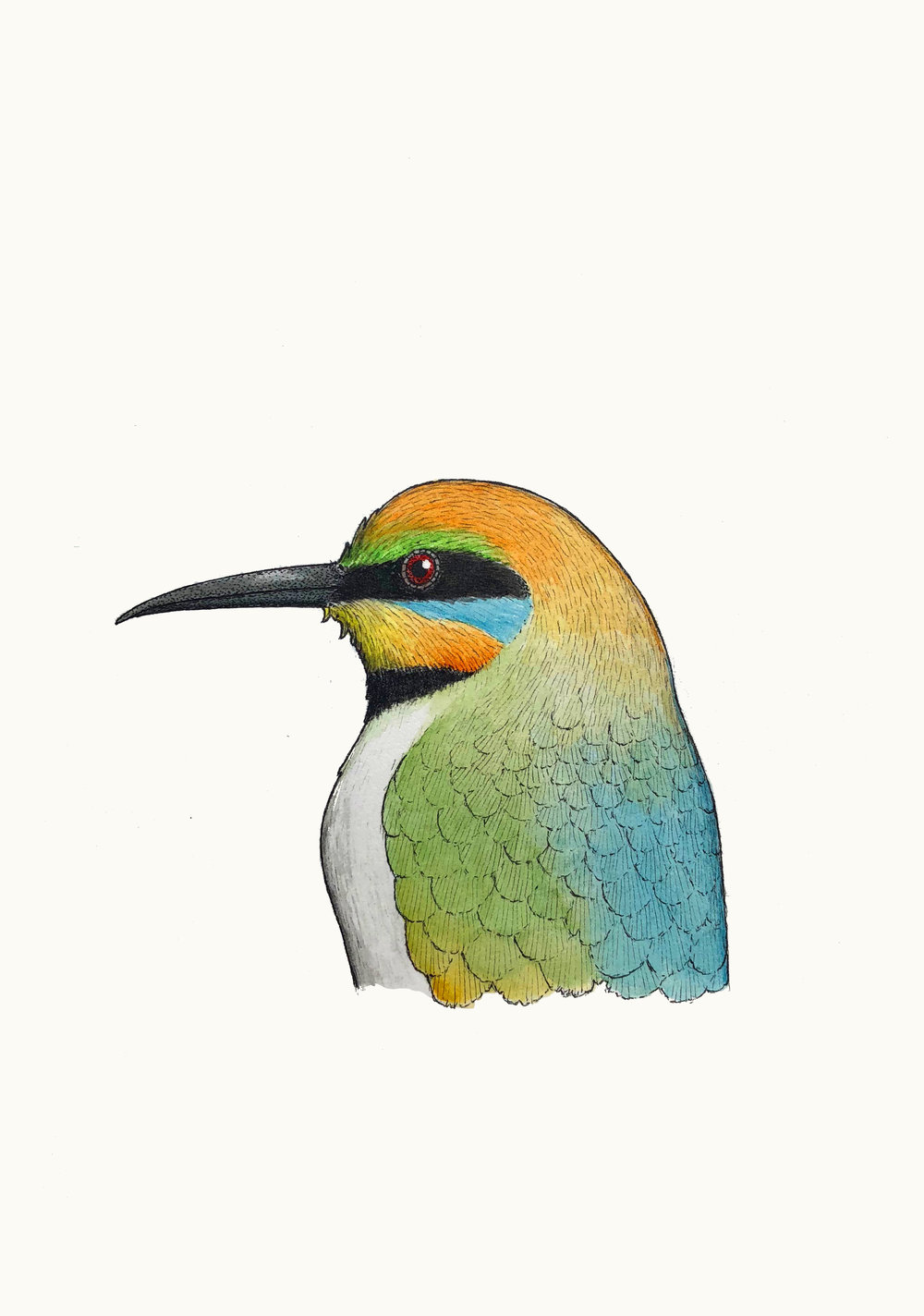 'Portrait of a Rainbow Bee-eater'