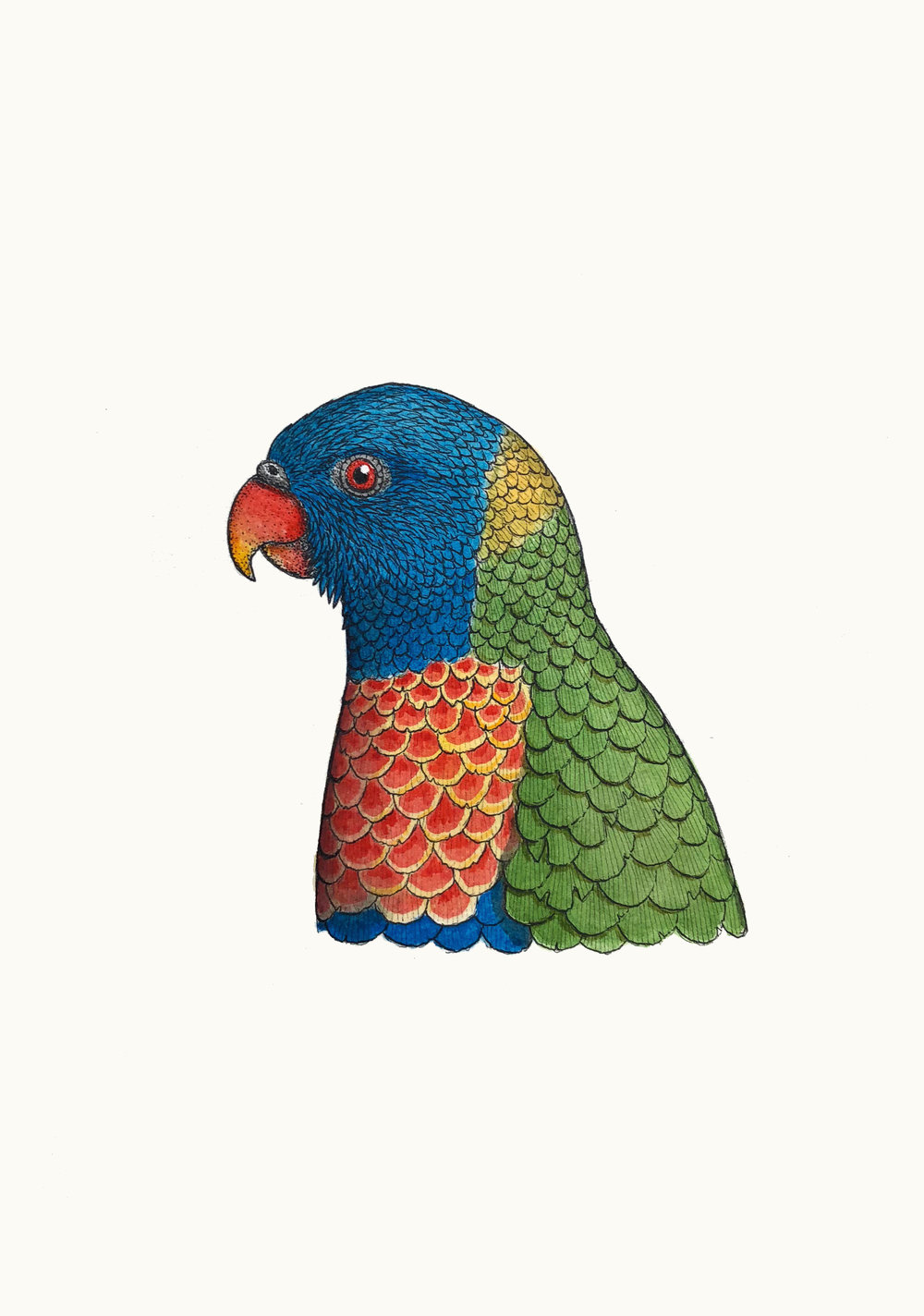 'Portrait of a Rainbow Lorikeet'