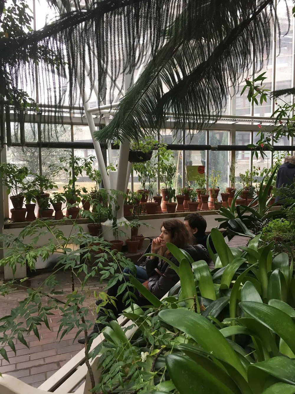 The Barbican Conservatory 5/2/2017 I would recommend visiting this tropical escapism. The cacti house is incredible!