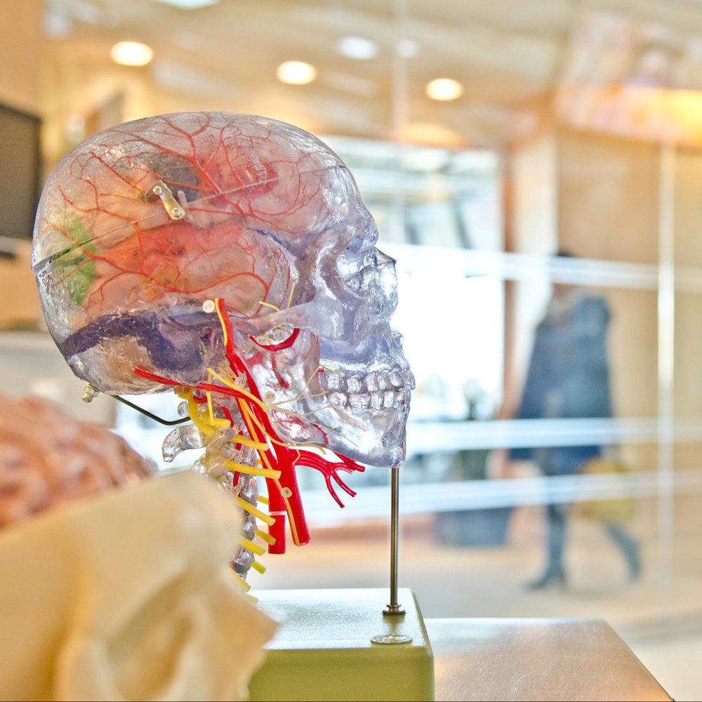 skull pic.jpg