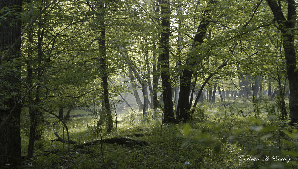 color morning in the woods 2- print.jpg