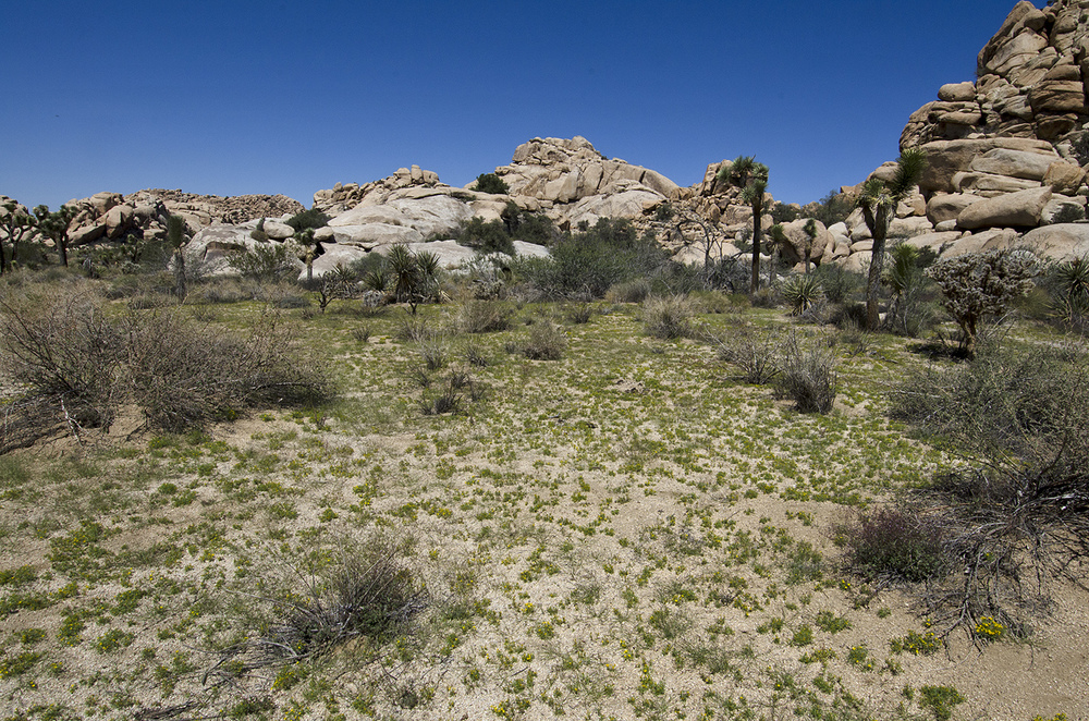 The desert floor was greener than I had ever seen it, and filled with tiny yellow flowers. And bees. I don't like bees.