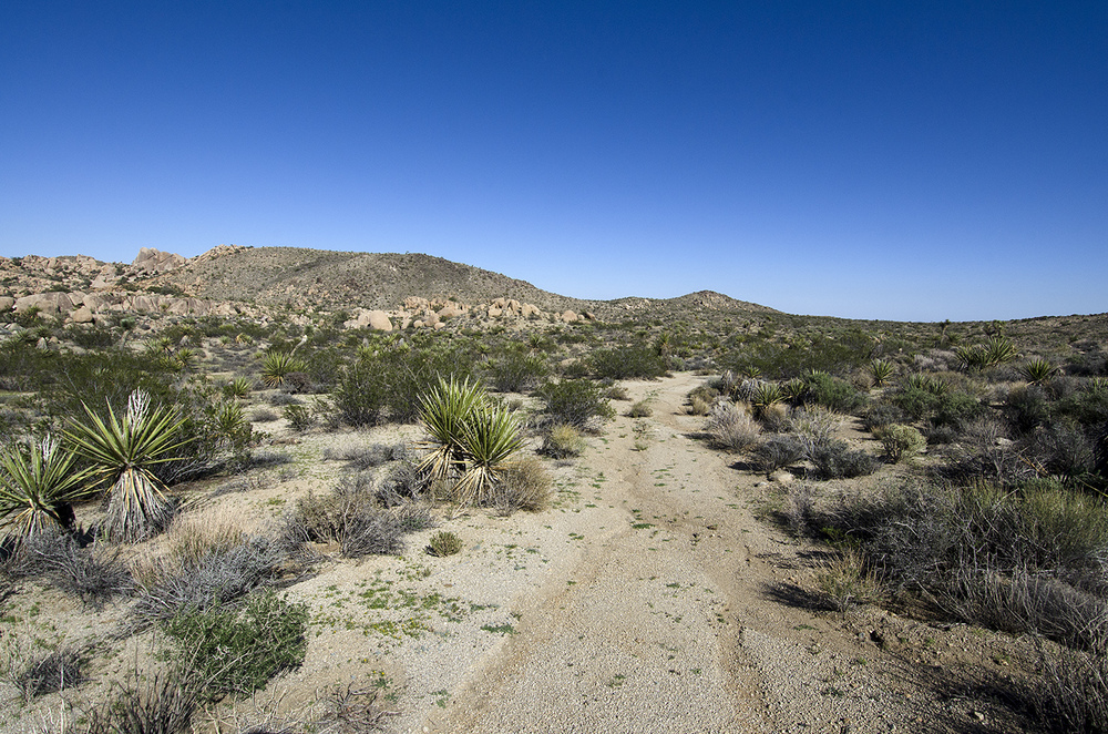 Beautiful desert trail.