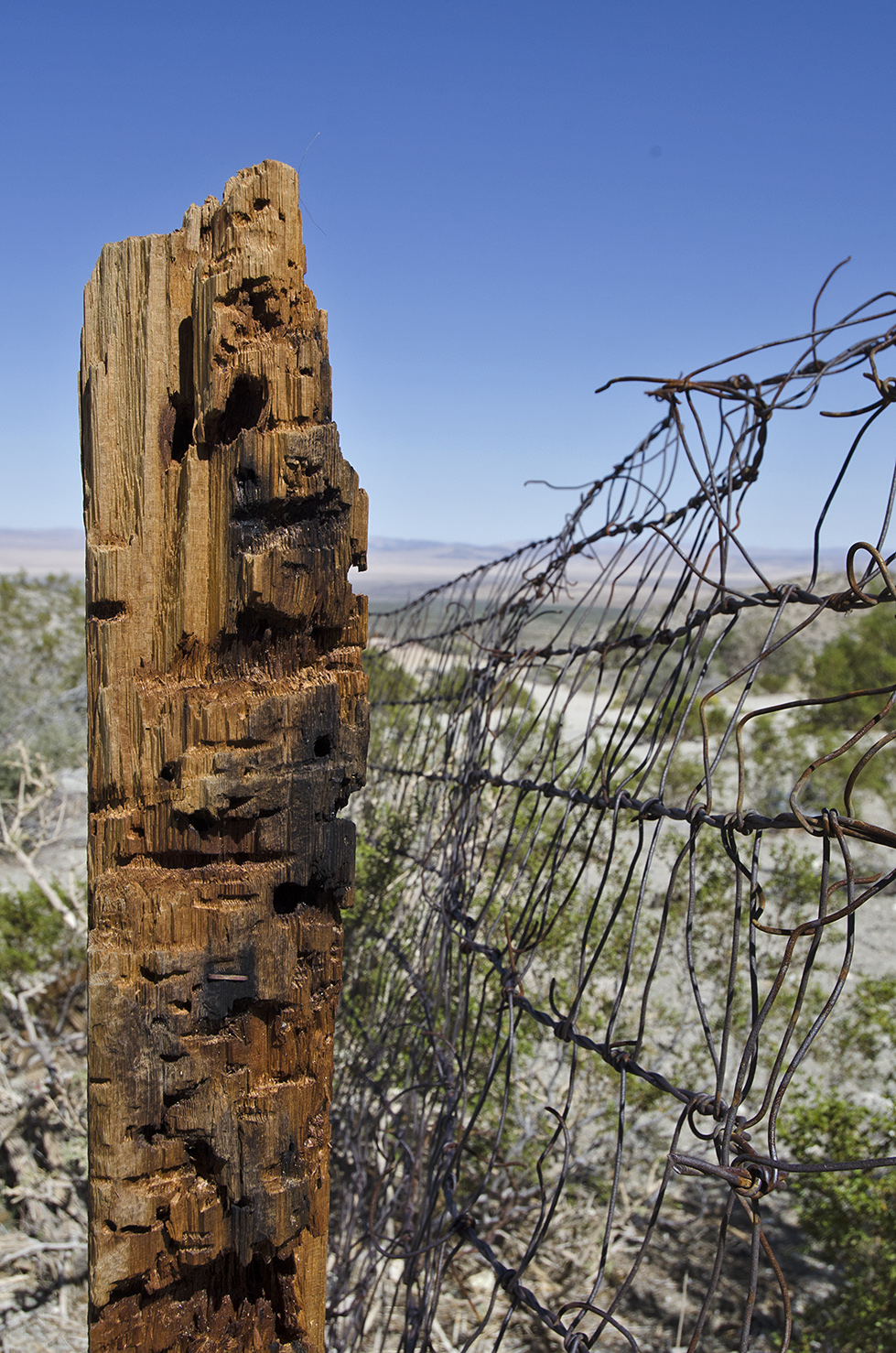 Closeup of a fencepost. Maybe a garden was inside the fence at one time.