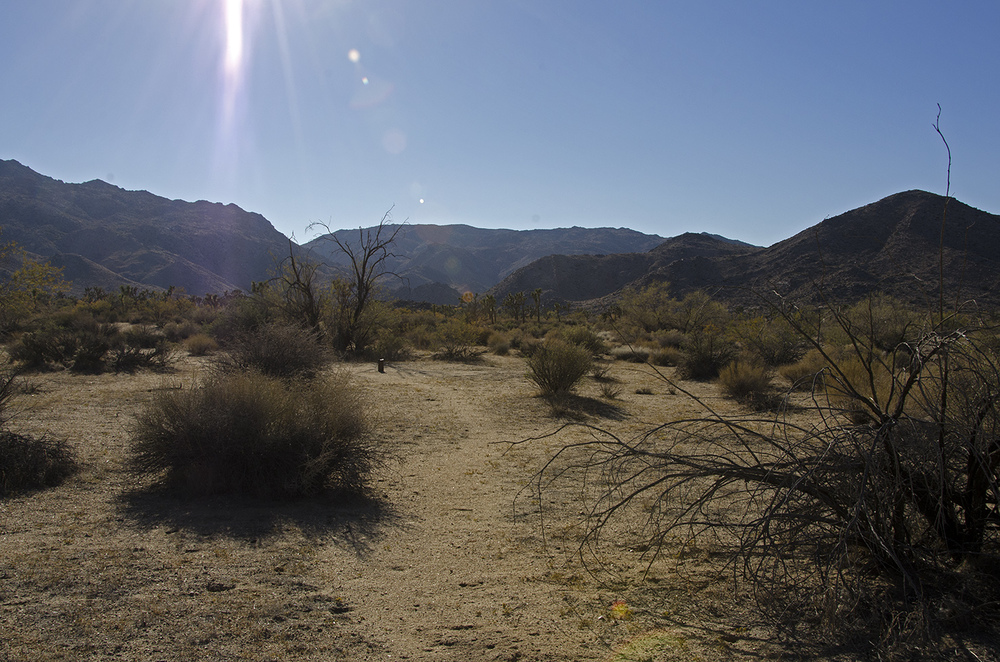 Something ahead looks not of the desert.