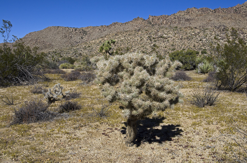 There were a few cholla hanging out in this part of the valley.