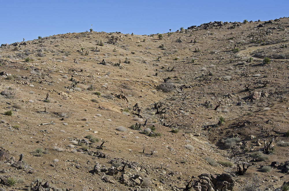 Here's a good view of part of the pipeline that brought water from Lost Horse Wells (3-1/2 miles distant) to the mine.