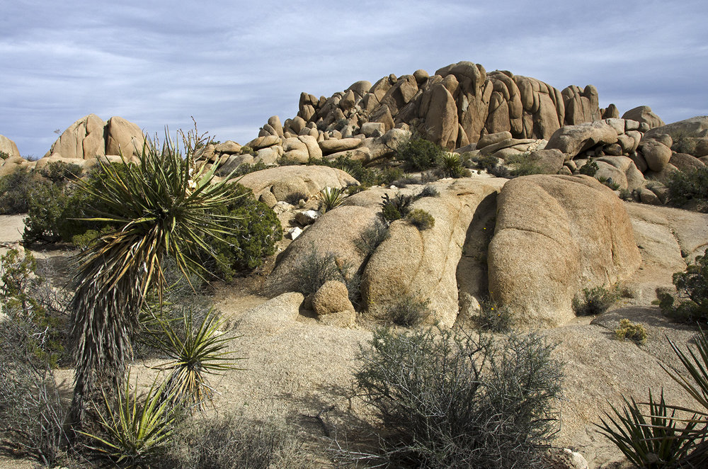 Skull Rock Trail - Joshua Tree NP 05