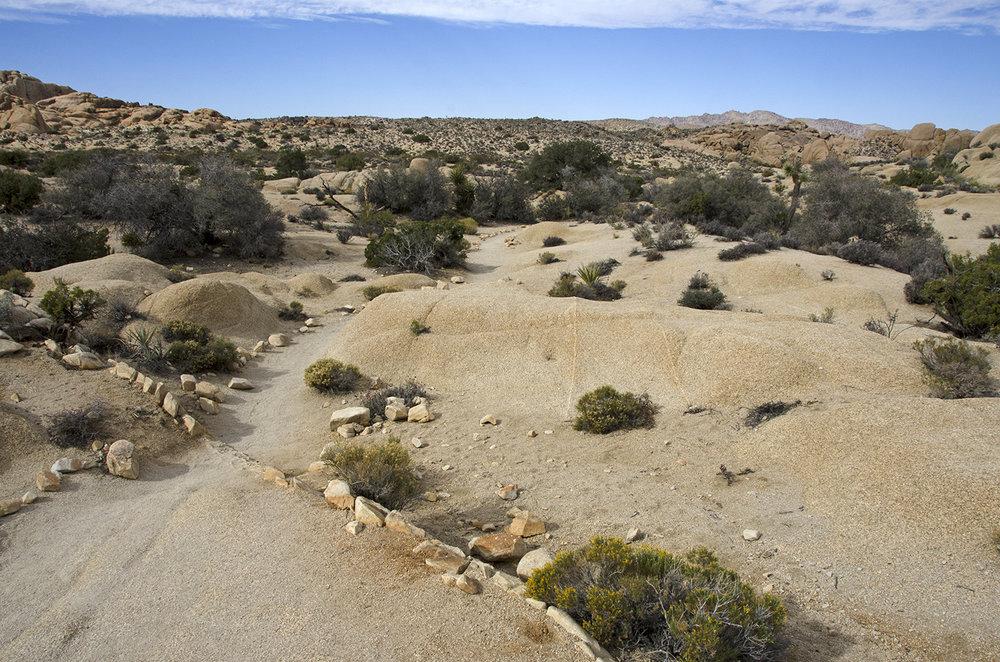 Skull Rock Trail - Joshua Tree NP 06