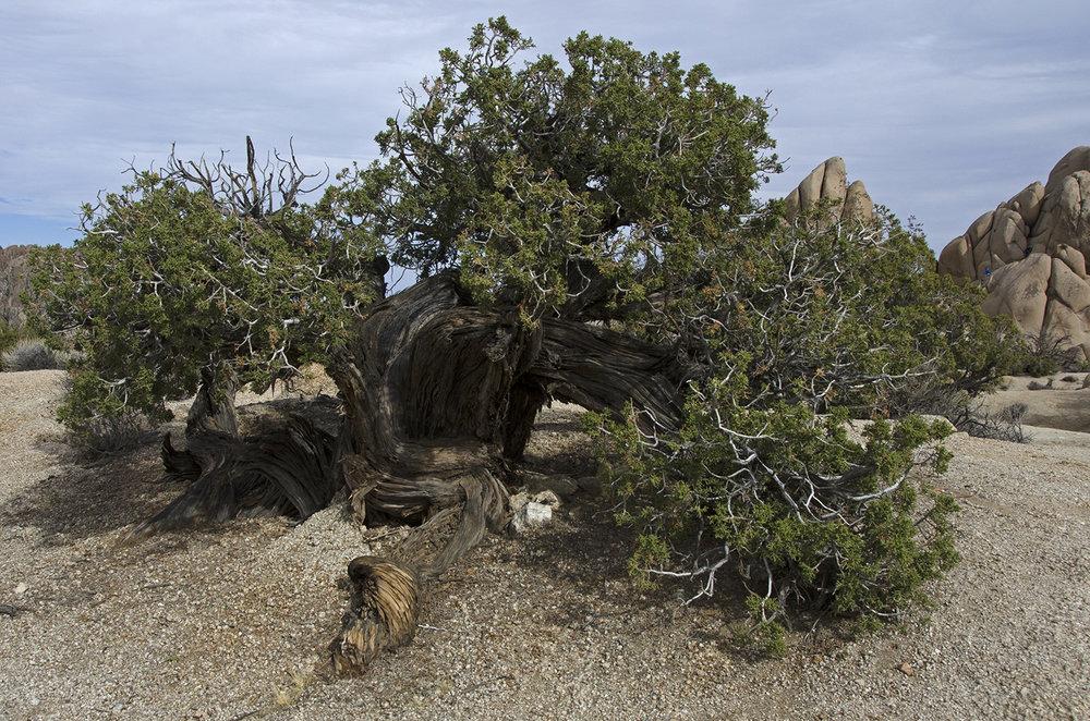 Skull Rock Trail - Joshua Tree NP 09