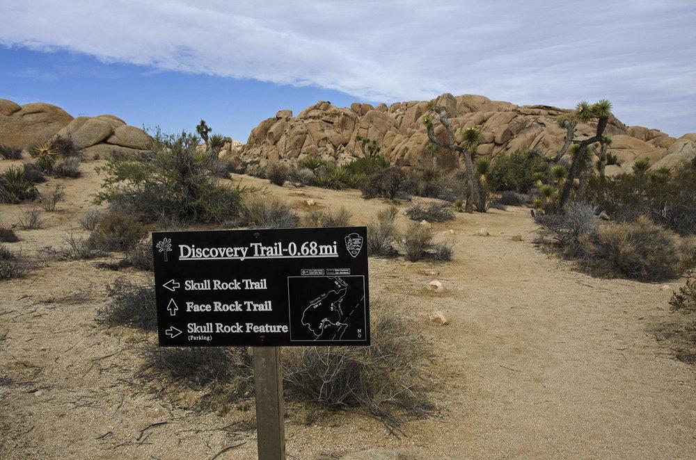 Skull Rock Trail - Joshua Tree NP 15