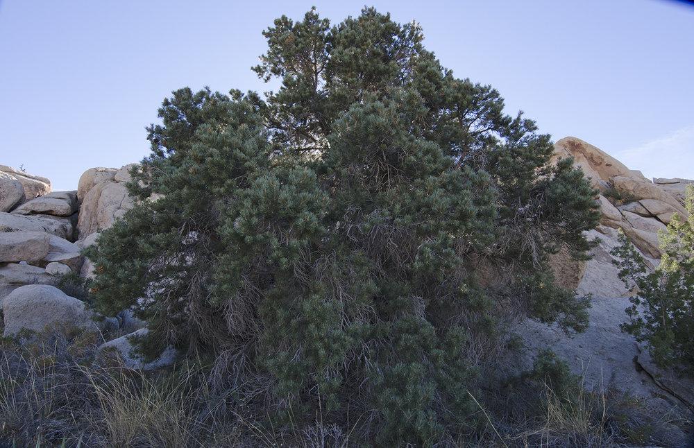Joshua Tree NP - Oyster Bar 25.jpg
