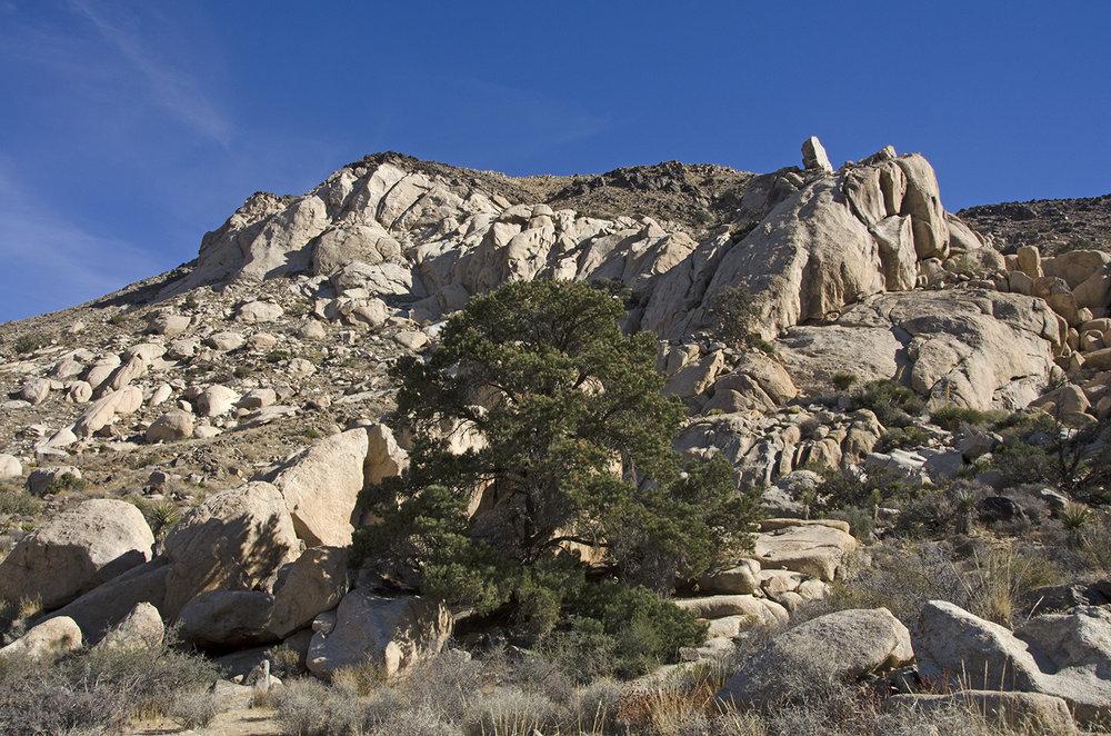 Joshua Tree NP - Oyster Bar 30 Cowboy Crag View.jpg