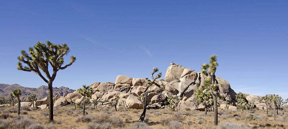 Joshua Tree NP - Planet X Area 17.jpg