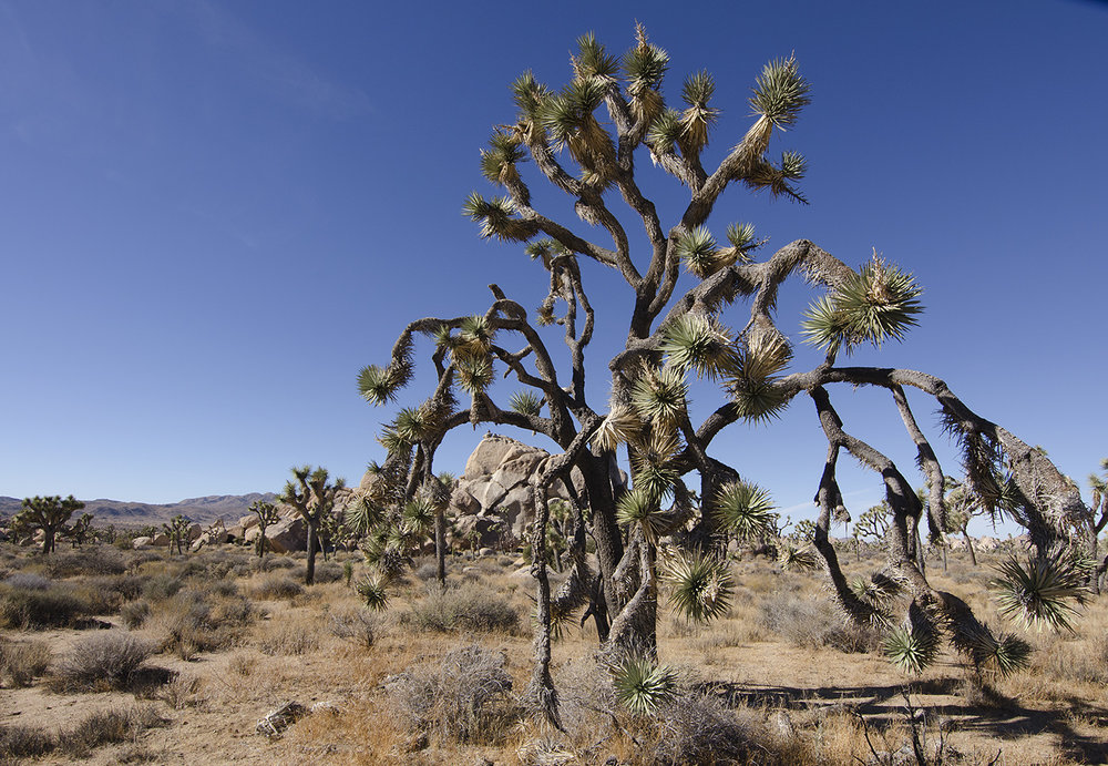Joshua Tree NP - Planet X Area 19.jpg