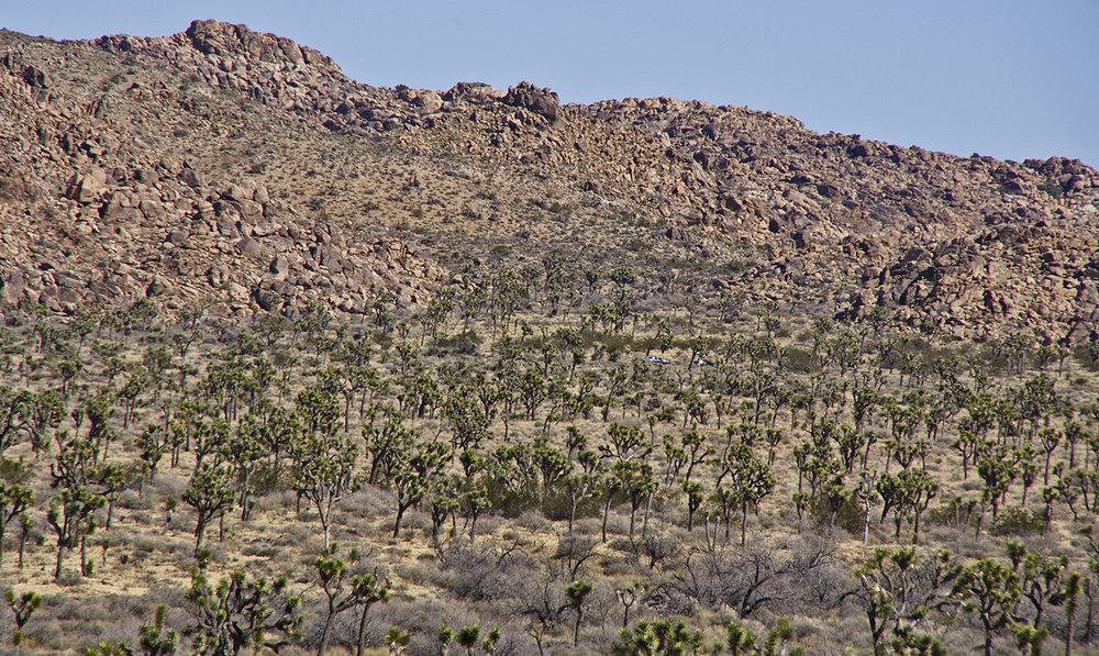 Samuelsons Rocks - Joshua Tree NP - 39.jpg