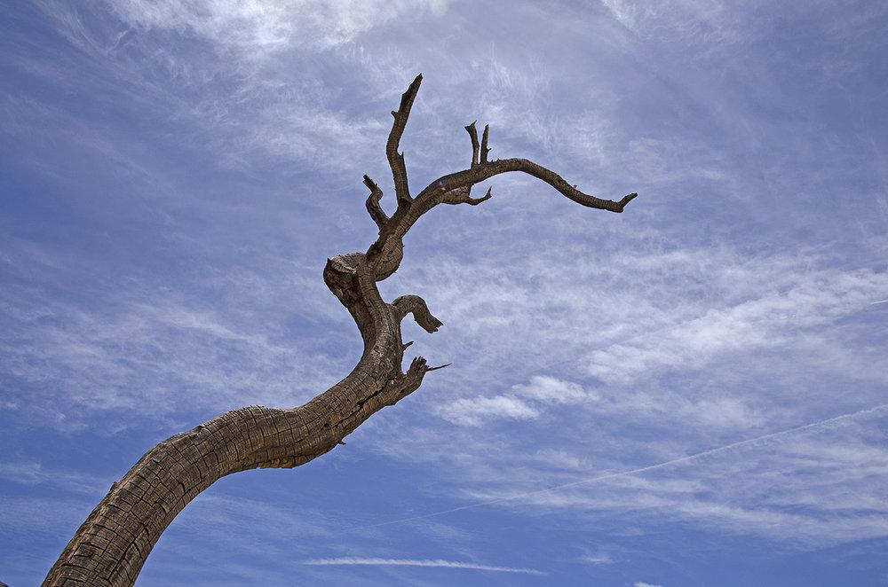 Joshua Tree National Park 030 Dead Branch.jpg