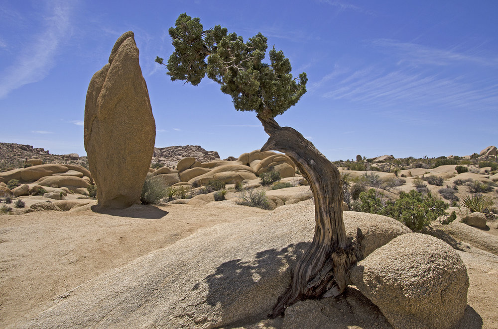 Joshua Tree National Park 021 Juniper and Monolith.jpg