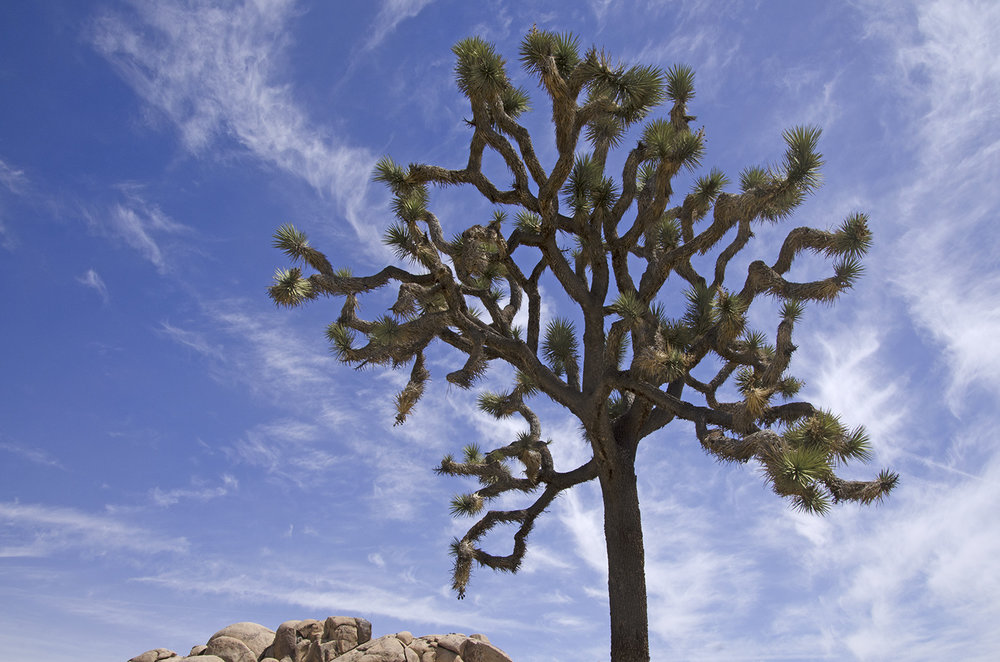 Joshua Tree National Park 020.jpg