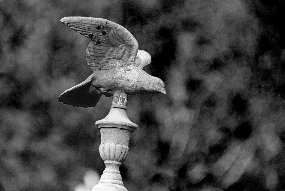Nevada City St. Canice Cemetery Bird.jpg