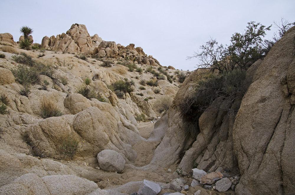 Joshua Tree NP - Stirrup Tank Area 14 Canyon 1.jpg