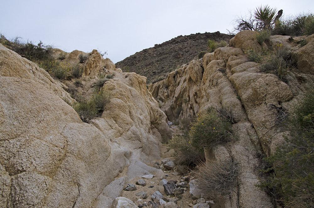 Joshua Tree NP - Stirrup Tank Area 14 Canyon 2.jpg