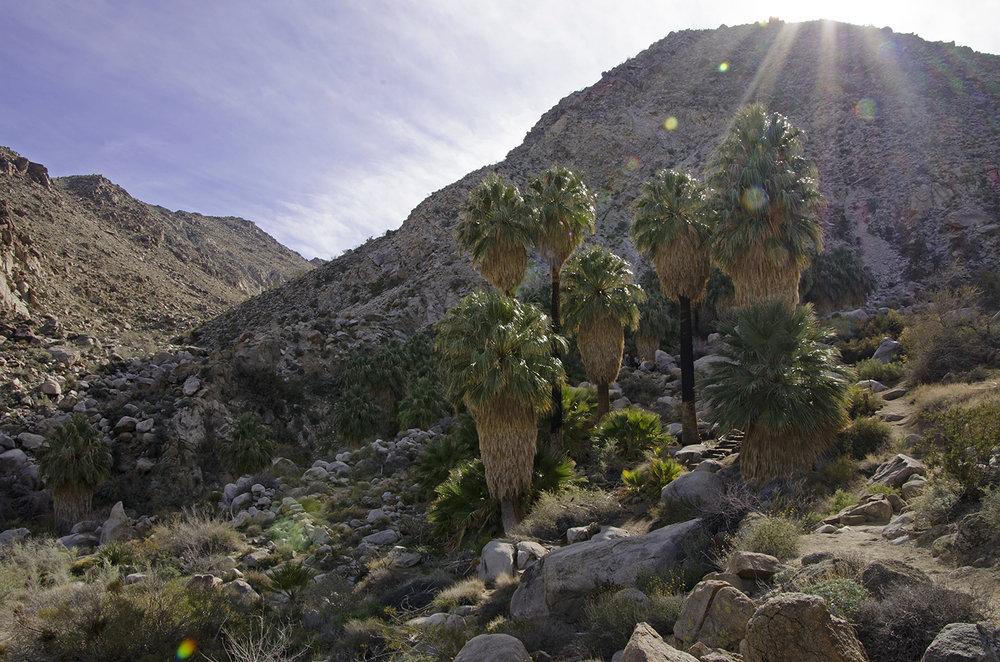 Fortynine Palms Oasis Joshua Tree NP 14.jpg
