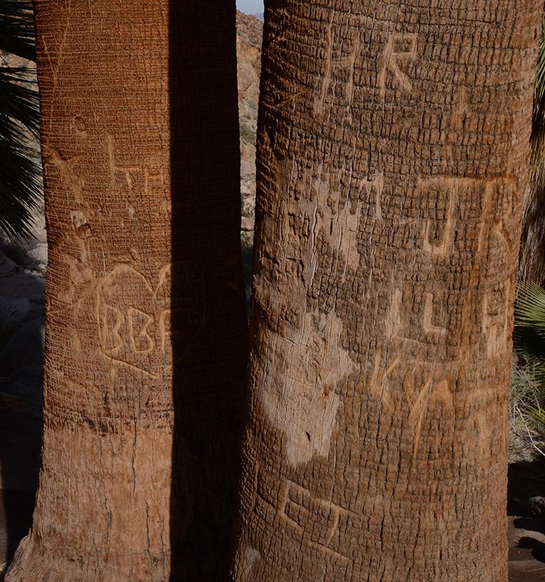 Fortynine Palms Oasis Joshua Tree NP 20.jpg