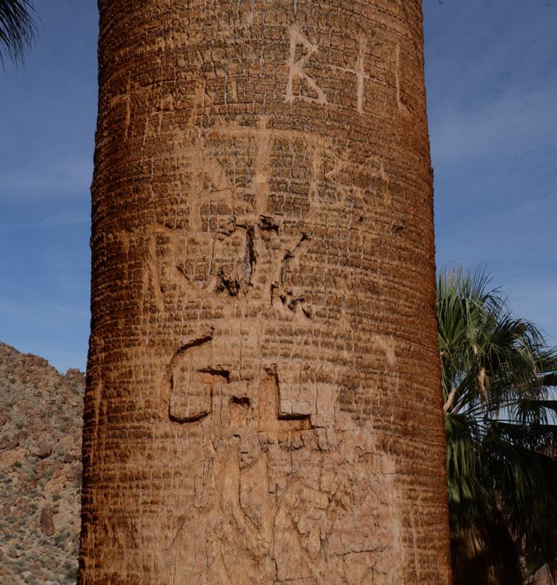 Fortynine Palms Oasis Joshua Tree NP 21.jpg
