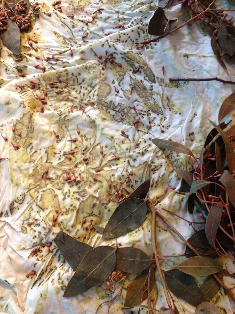 Seeded eucalyptus on spun silk broadcloth, hot mordanted with alum, iron and copper.   Print by P. J. Z.