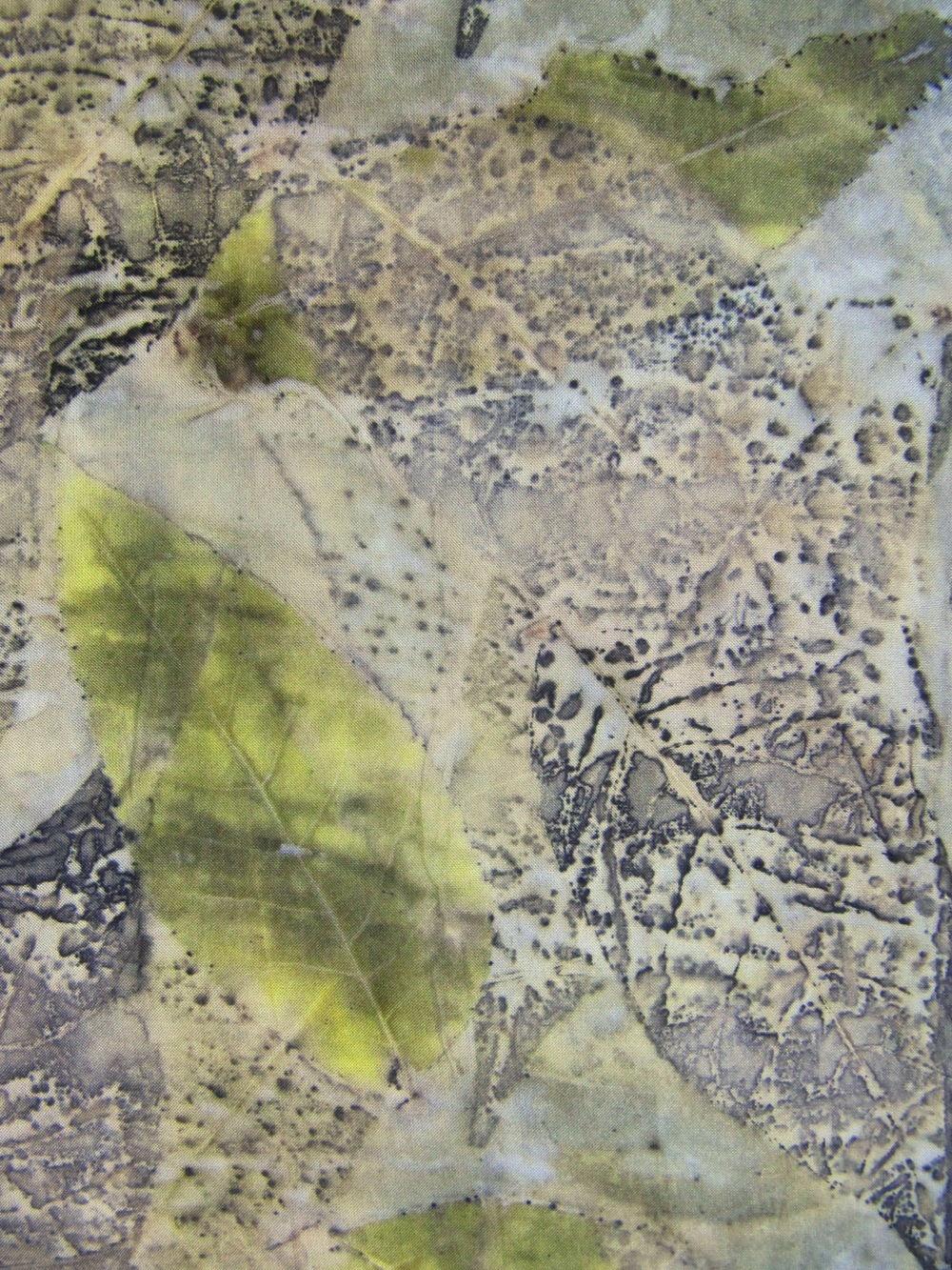 Black Walnut Leaves 9-26.JPG
