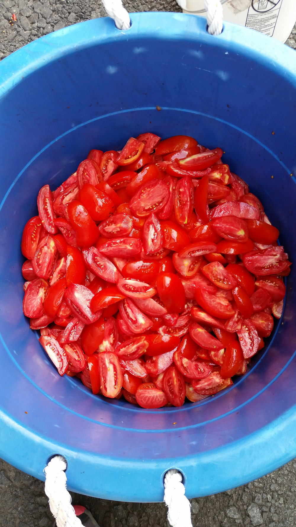 PC_Canning_Tomatoes_02.jpg