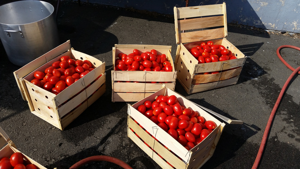 PC_Canning_Tomatoes_01.jpg