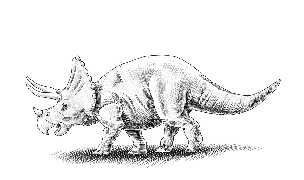 triceratops jason muhr.jpg