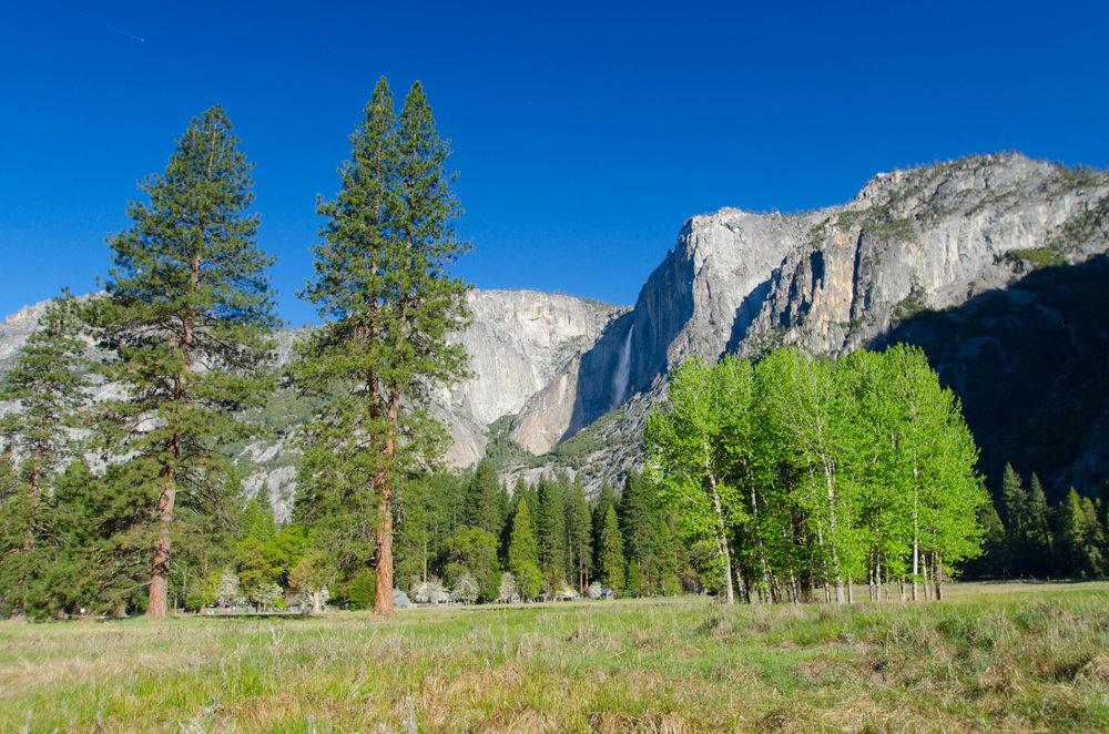 Yosemite Valley, looking up towards Yosemite Falls