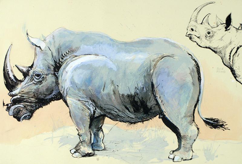Black Rhino Study (Field Museum)