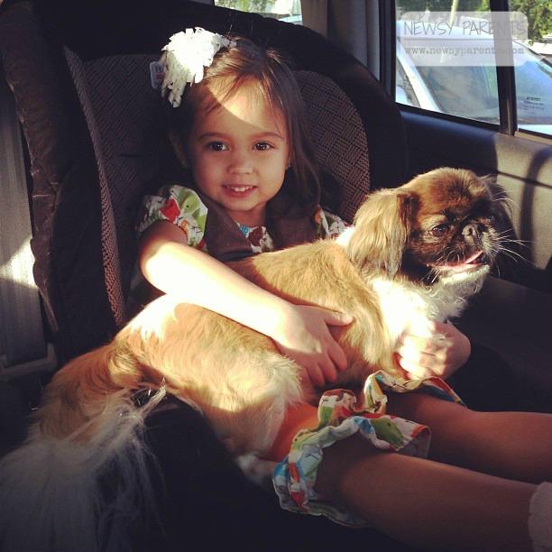 Newsy Parents Bailey Pekingese Shih Tzu mix dog mixed breed