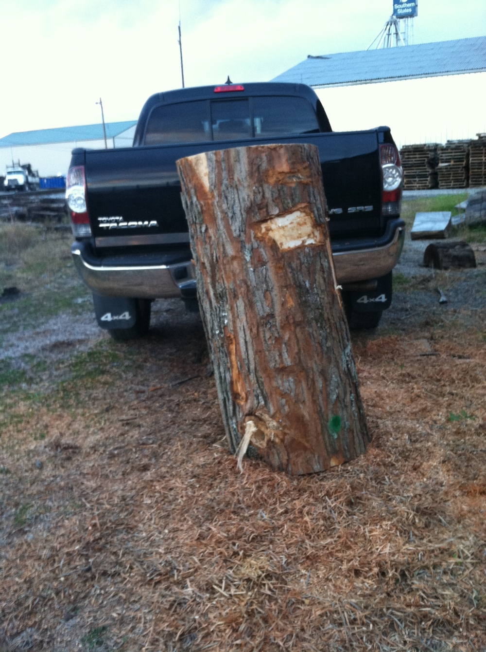 So here is that piece of WV Hard Maple.  Keep in mind that this was in the firewood pile...