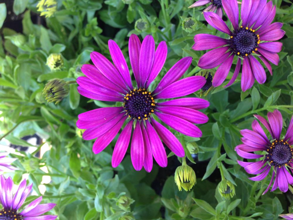 Flower-Original.png