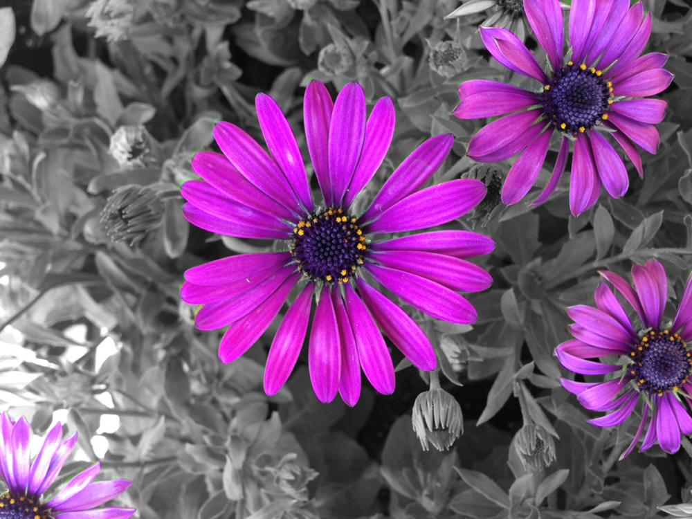 Title Flower
