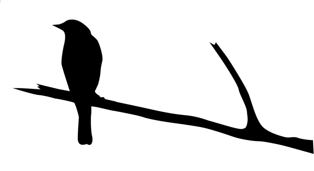 BirdOnLimb.jpg