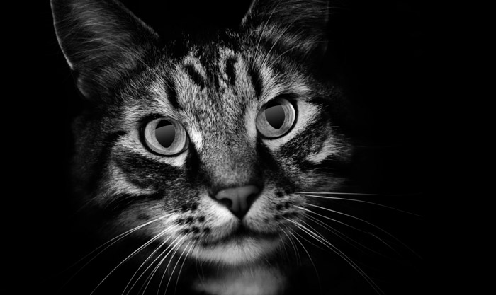 even-cat.jpg