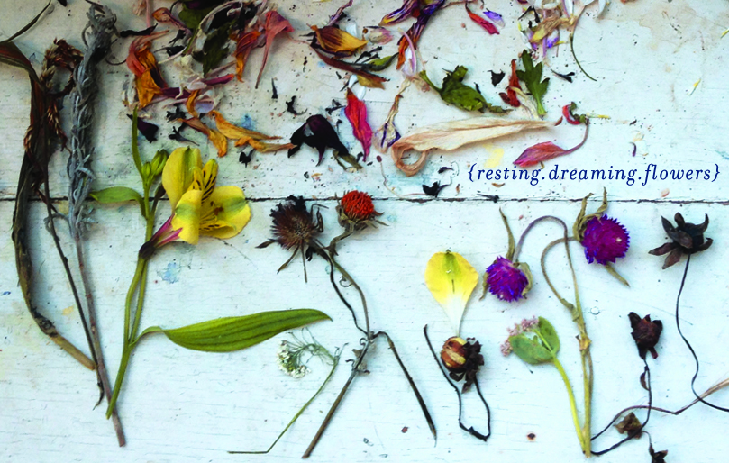 collage > what do the flowers dream about?