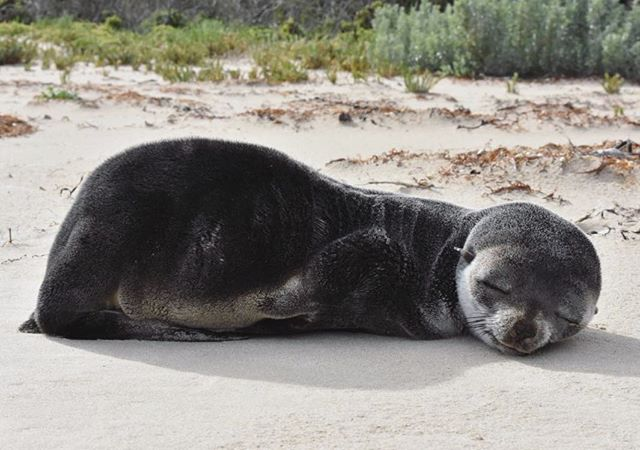 When I grow up I want to be this seal.