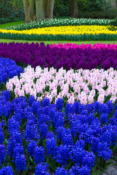 Holland Spring Blooms_Z5A5319_34.jpg