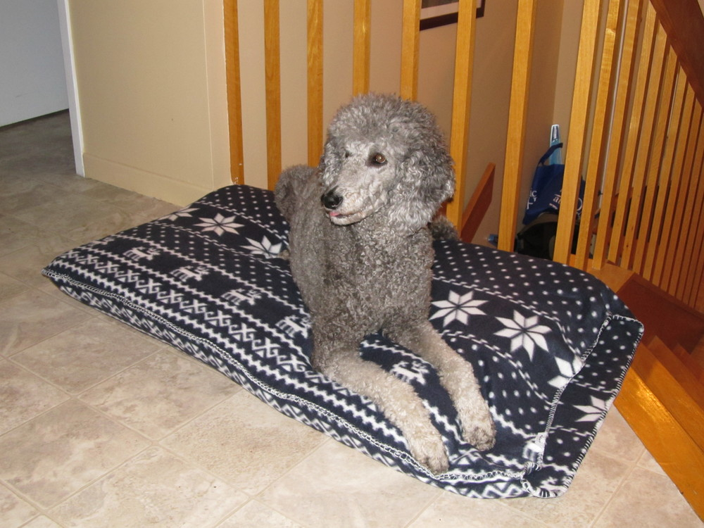 Lulu, who hates having her picture taken (but will do anything for treats), on her new bed.